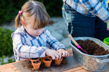 organic farm: child girl planting flower bulbs with mother. Gardening, planting concept - mother and daughter planting tulip and hyacinth  bulbs into small pots Stock Photo