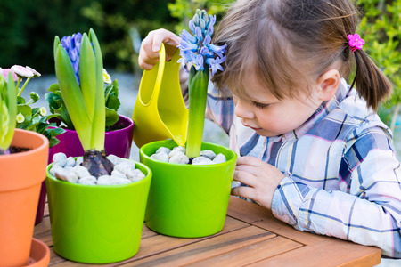 child girl watering flowers. Gardening, planting concept - little girl watering hyacinth  after planting Фото со стока