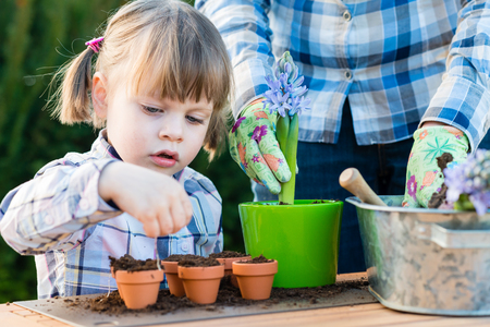 child girl planting flower bulbs with mother. Gardening, planting concept - mother and daughter planting tulip and hyacinth  bulbs into small pots Standard-Bild