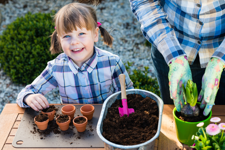 to plant: child girl planting flower bulbs. Gardening, planting concept - mother and daughter planting tulip and hyacinth  bulbs into small pots