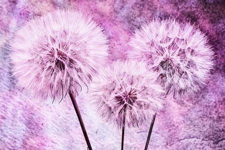 Vintage background - Vivid color abstract dandelion flower - extreme closeup with soft focus, beautiful nature details Banque d'images