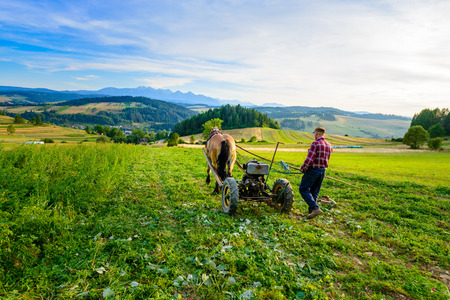 Farmer cultivates the soil with a horse in Pieniny - mountainous area