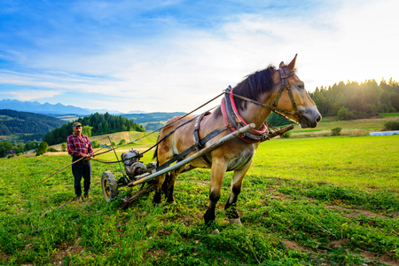 Sromowce Wyzne, Poland -  - August 27/2015; The farmer cultivates the soil with a horse in a mountainous area Stock Photo - 86835251