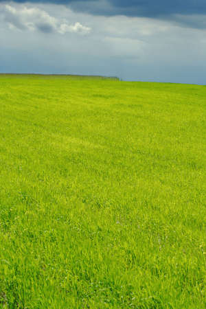 spring landscape with plain green field