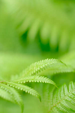fern - frond with small depth of field Stock Photo