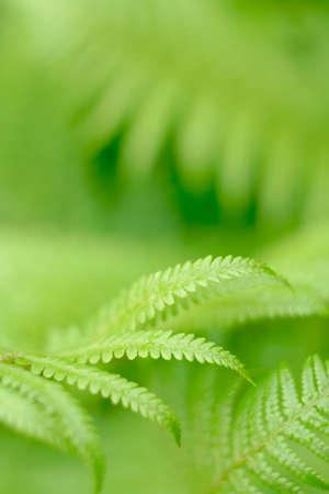 fern - frond with small depth of field Zdjęcie Seryjne