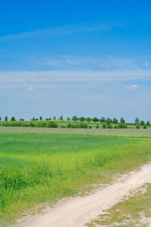 yellowish: flat rural landscape with old sandy track, meadow and trees line on the horizon