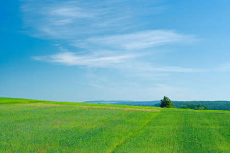 picturesque grassy farmland with lone tree and fuzzy clouds on the sky photo