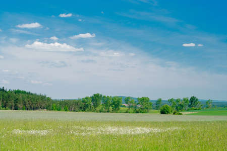 picturesque rural landscape with white flowers and line of trees in the middle plane photo