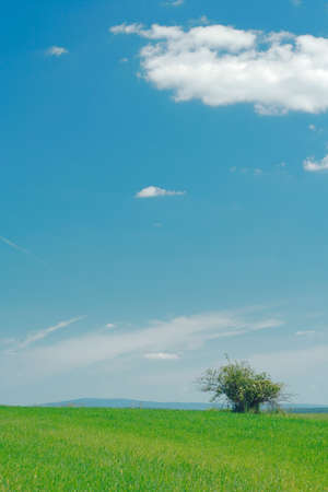 flat landscape with lone bush and mixed clouds on the sky photo