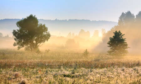 Foggy morning light over meadow with forest in background Stock Photo - 7403342