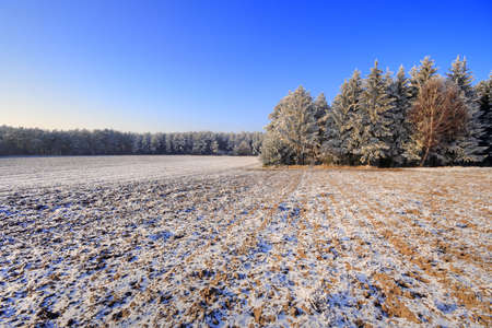 Winter landscape with plowed fields and forest under blue sky