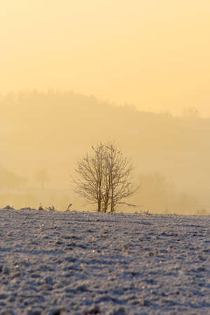 Warm lighted hazy winter morning with field covered by thin layer of snow and small trees photo