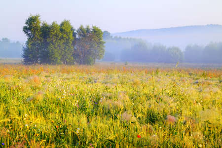 A trees cluster in morning light with delicate fog over meadows. Poland, Swietokrzyskie, near Bolmin. Stock Photo