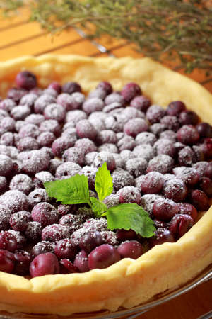 Tart with blueberry (Northern Highbush Blueberry) fruits and powdered sugar. Berries are red after baking.