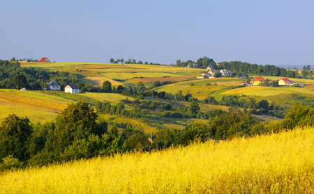 yellowish green: Landscape with wavy fields, village and bushes. Warm evening light. Cereal field on first plane. Poland, Swietokrzyskie. Stock Photo