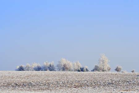 Winter landscape with frozen plowed fields and trees. Poland, Swietokrzyskie.