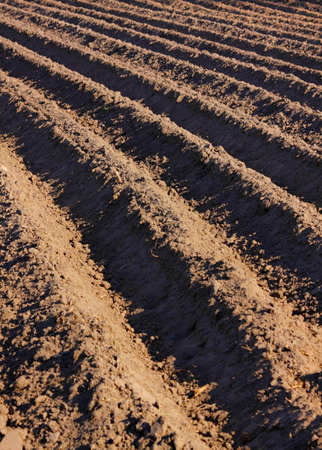 the ploughed field: Detail of a ploughed field with furrows