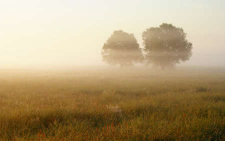Hazy morning over meadow with two trees silhouette. Europe, Poland, Holy Cross Mountains. Stock Photo