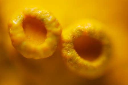 high scale magnification: Microscopic view of common orange lichen (Xanthoria parietina) apothecia. Reflected light. Stock Photo