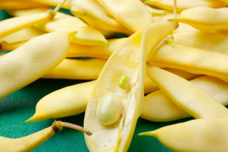 bean pod: Flat yellow wax beans with one opened bean pod