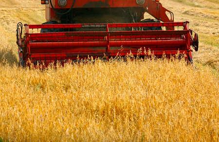 cosechadora: Detalle de un trabajo cosechadora en campo de cultivo