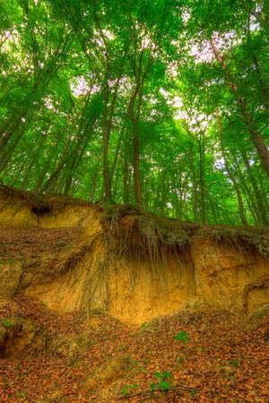 suelo arenoso: escarpe de arena dentro del bosque de haya. Polonia, montañas de Santa Cruz.