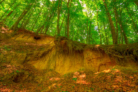 scarp: Sandy scarp inside beech forest. Poland, Holy Cross Mountains.