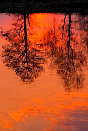 reflected: Trees reflected in lake surface at sunset