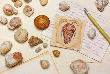 Nostalgic vintage still life with trilobite drawing, sea fossils and antique nib pen over aged paper sheets