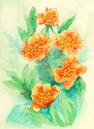 Peony (Paeonia) flowers. Gouache painting on paper.