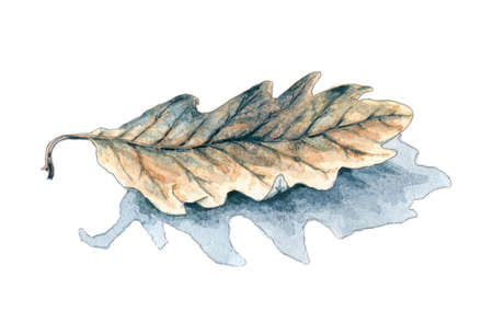 Fallen oak (Quercus) leaf with shadow over white background. Pencil and watercolor wash on rough paper. Stock Photo
