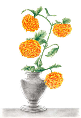 Drawing of a Chrysanthemums in a vase. Graphite and colored pencils on paper. Standard-Bild