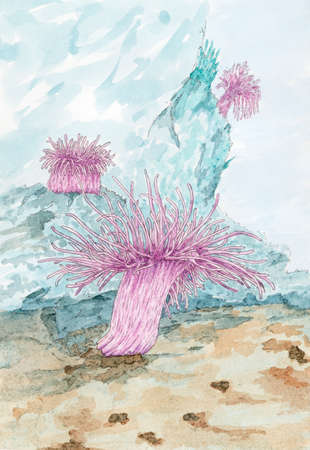 Painting of a Sea anemones polyps. Pencil and watercolor on paper. Stock Photo