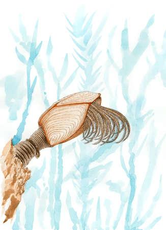 barnacle: Painting of a pelagic gooseneck barnacle (Lepas anatifera). Pencil and watercolor on paper. Stock Photo