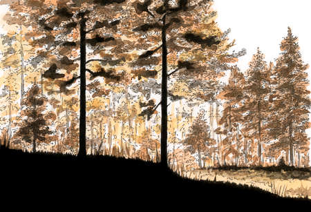 Coniferous forest. Ink and watercolor on paper.