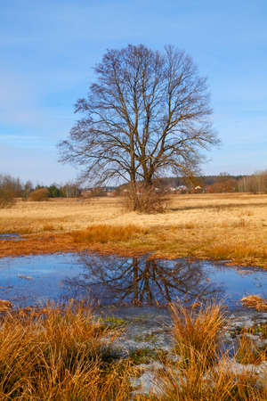 Dry grasses and small pond on flood-meadow at early spring with trees. Poland, The Holy Cross Mountains.