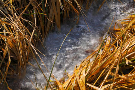 Frozen stream among dry grasses at early spring. Poland, The Holy Cross Mountains. Reklamní fotografie