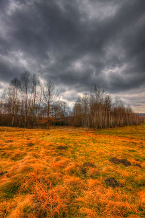 Meadow and small forest under dramatic sky at early spring. HDR image. Poland, The Holy Cross Mountains. Reklamní fotografie
