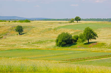 Landscape with meadows and trees. Poland, The Holy Cross Mountains. Reklamní fotografie
