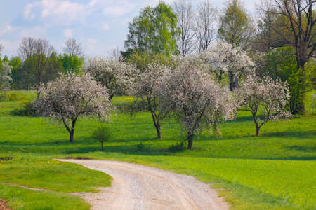 Spring landscape with flowering trees and dusty road. Poland, The Holy Cross Mountains. Reklamní fotografie