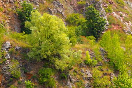 Trees and bushes on a rocky slope. Poland, Kielce (Wietrznia, geological reservation), The Holy Cross Mountains.