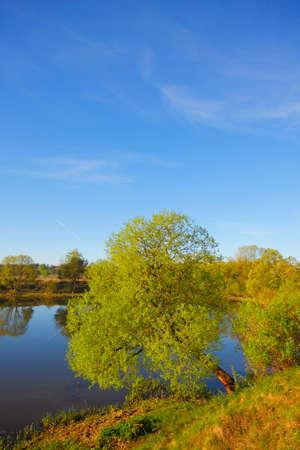 Willow on lakeshore. Mojcza lake near Kielce, Poland, The Holy Cross Mountains. Reklamní fotografie - 104665523