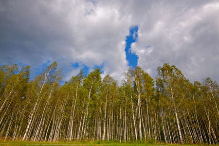 Birch forest under cloudy sky. Poland, The Holy Cross Mountains. Reklamní fotografie - 104665524