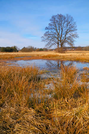 Dry grasses and small pond on flood-meadow at early spring with trees. Poland, The Holy Cross Mountains. Reklamní fotografie - 120551160