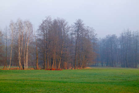Hazy morning landscape with trees and meadow. Poland, The Holy Cross Mountains. Reklamní fotografie - 120542869