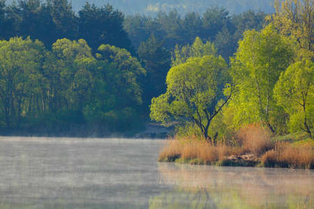 Morning landscape with trees and fog over lake surface. Mojcza lake near Kielce, Poland, The Holy Cross Mountains. Reklamní fotografie - 120542868