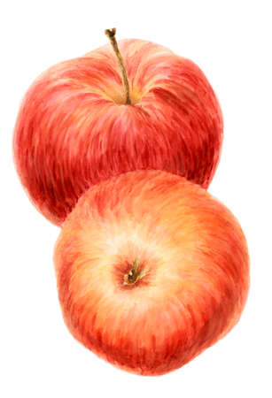 Two red apple fruits (Malus domestica) over white background. Watercolor on paper.