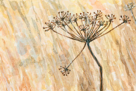 Umbel of a unspecified plant from Apiaceae (Umbelliferae) family in a rainy weather. Watercolor and gouache on paper.