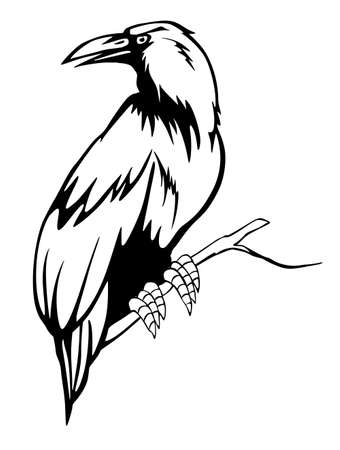 Black raven on the branch. Vector illustration Vector